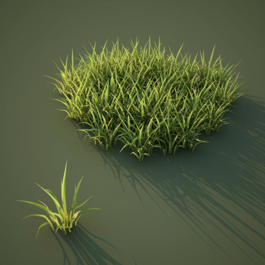 Grass Clump royalty-free 3d model - Preview no. 4
