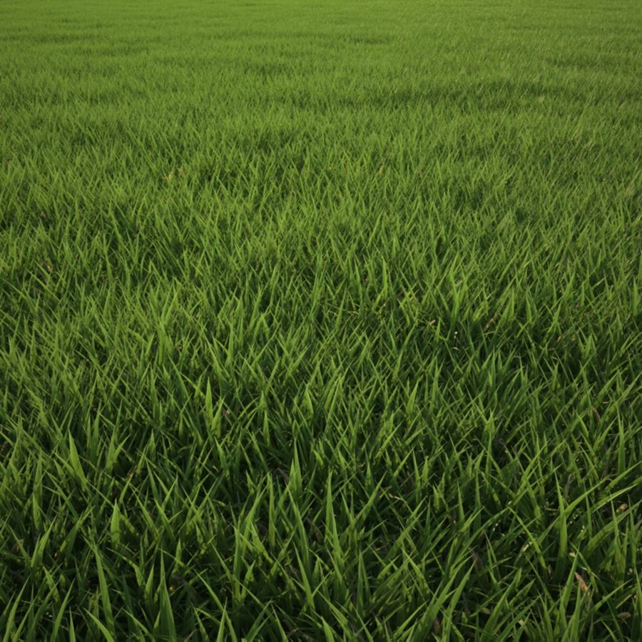 Grass Clump royalty-free 3d model - Preview no. 3