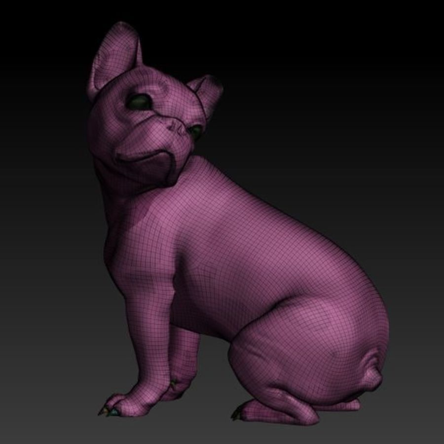 Französische Bulldogge1 royalty-free 3d model - Preview no. 5