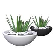 Aloe Vera - Potted Plant 2 3d model