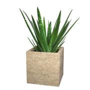 アロエベラ - 鉢植えの植物 3d model