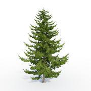 낙엽송 나무 3d model