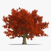 Красный Дуб Старое Дерево Осень 3d model