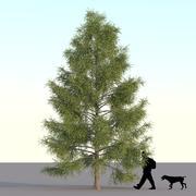 Spruce Tree 7m 03 3d model
