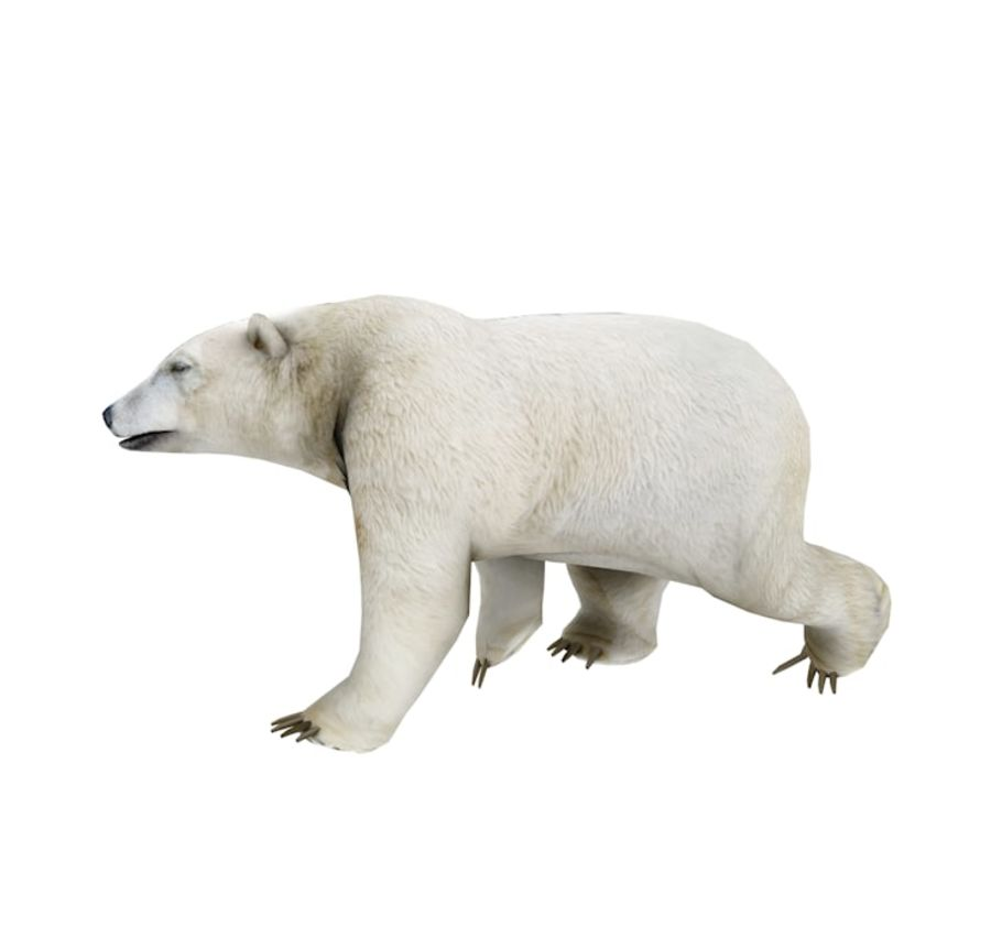 Polar Bear royalty-free 3d model - Preview no. 4