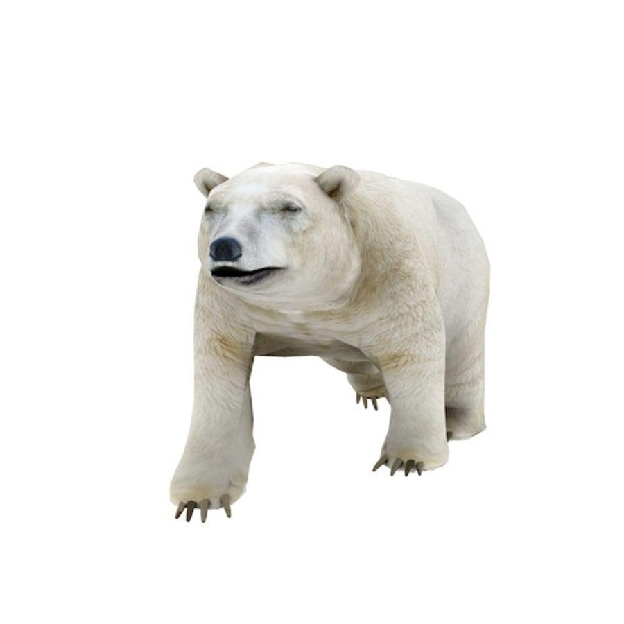Polar Bear royalty-free 3d model - Preview no. 3