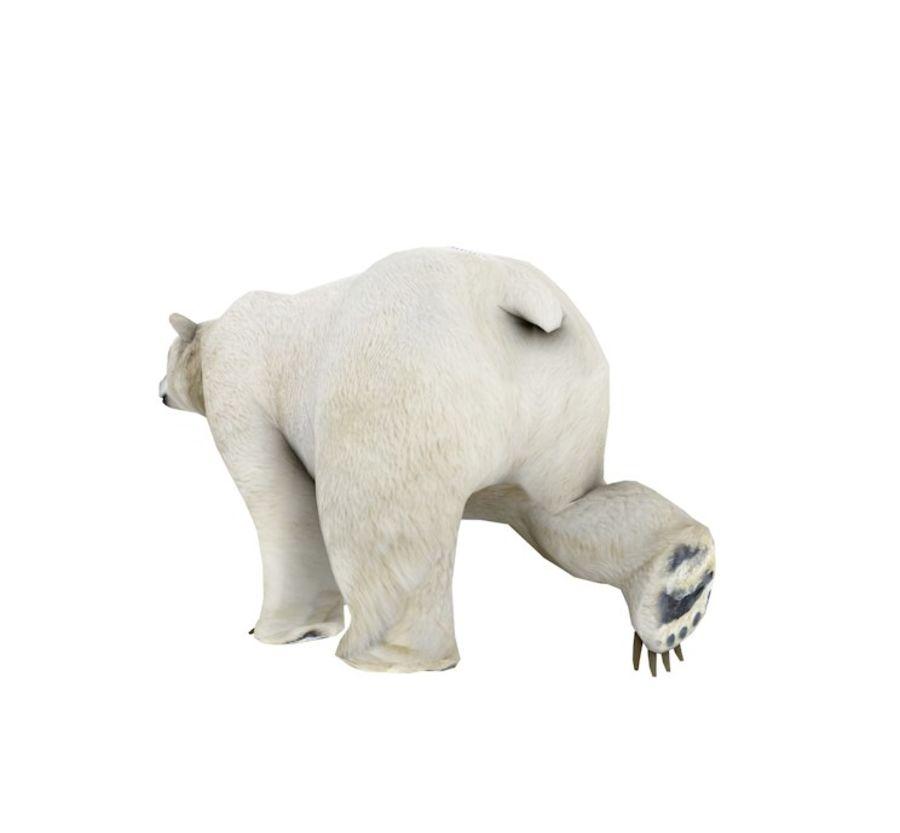 Polar Bear royalty-free 3d model - Preview no. 5