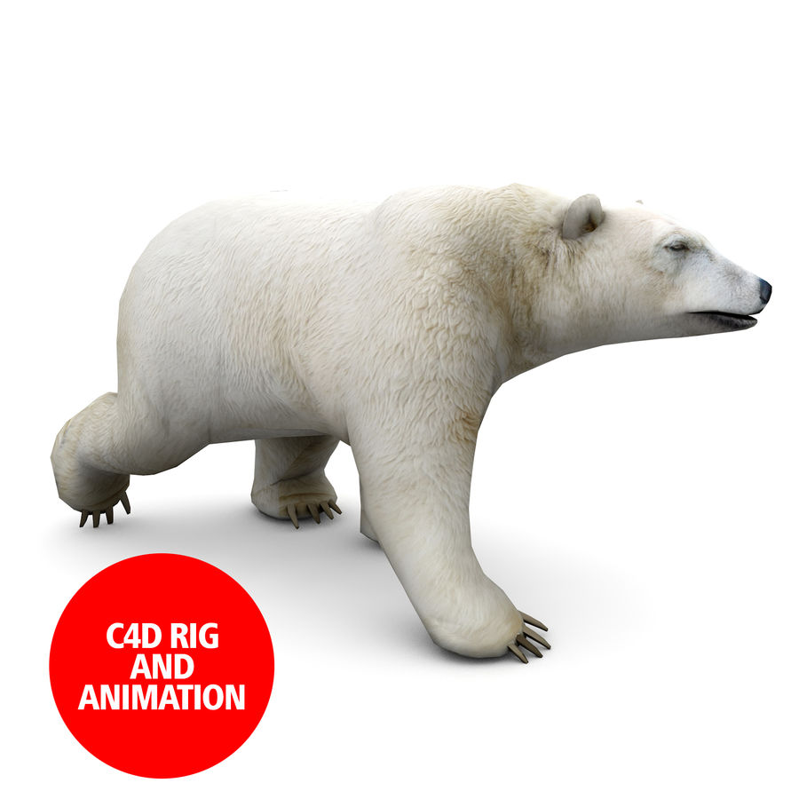 Polar Bear royalty-free 3d model - Preview no. 1