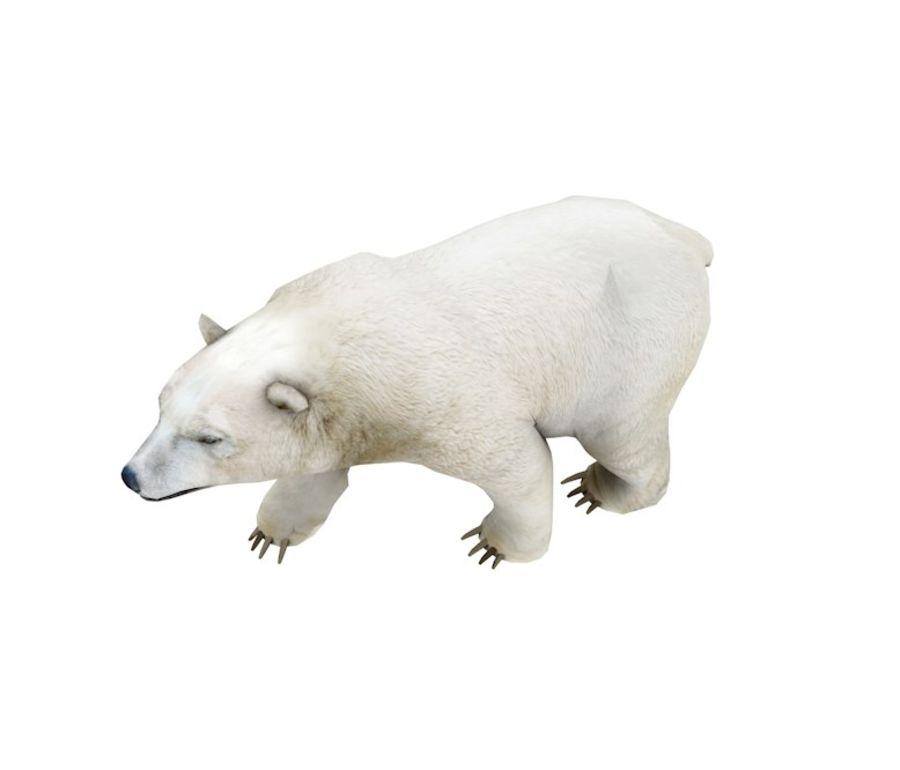 Polar Bear royalty-free 3d model - Preview no. 2
