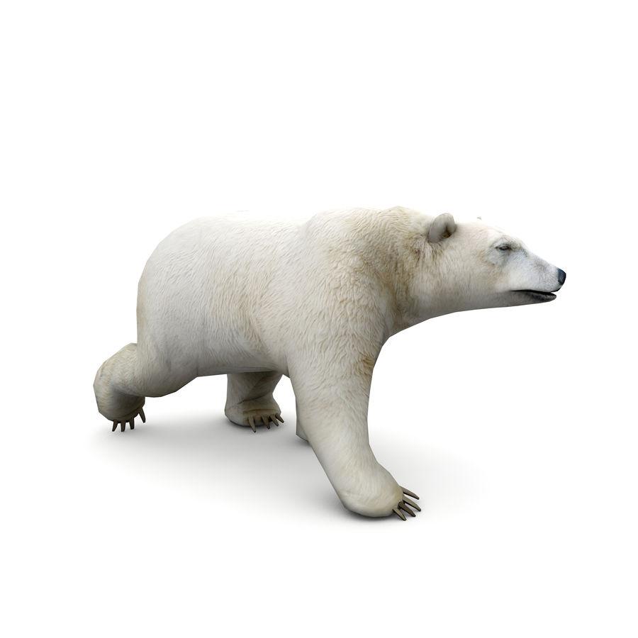 Polar Bear royalty-free 3d model - Preview no. 6