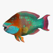 무지개 앵무새 물고기 3d model