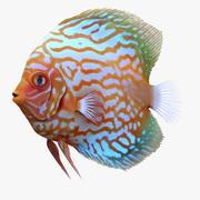 Симфизодон Рыба 3d model