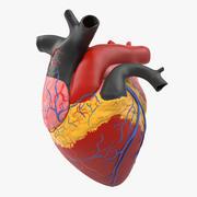 解剖学心脏医疗塑料模型 3d model