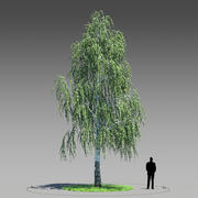 Birch Tree 02 (Betula Pendula) 3d model