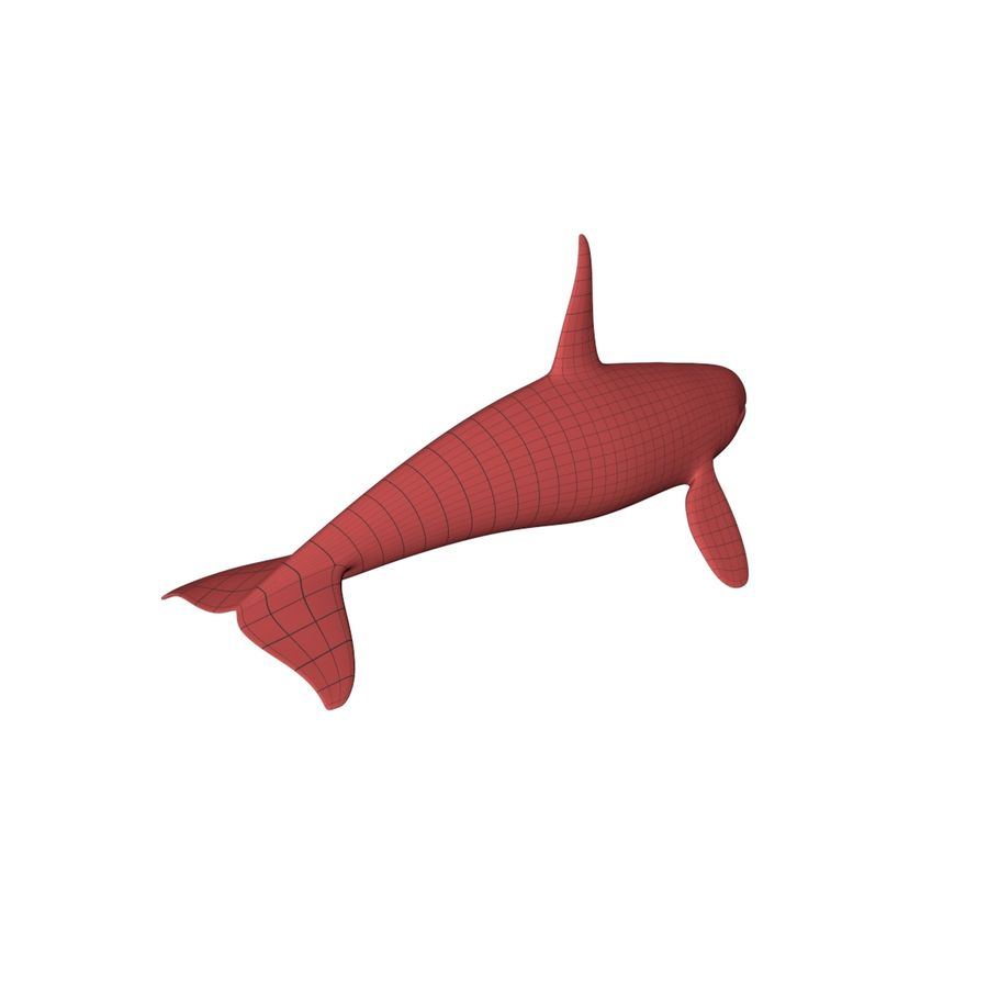Orca whale base mesh royalty-free 3d model - Preview no. 7