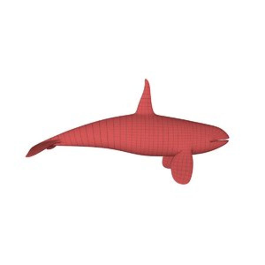 Orca whale base mesh royalty-free 3d model - Preview no. 1