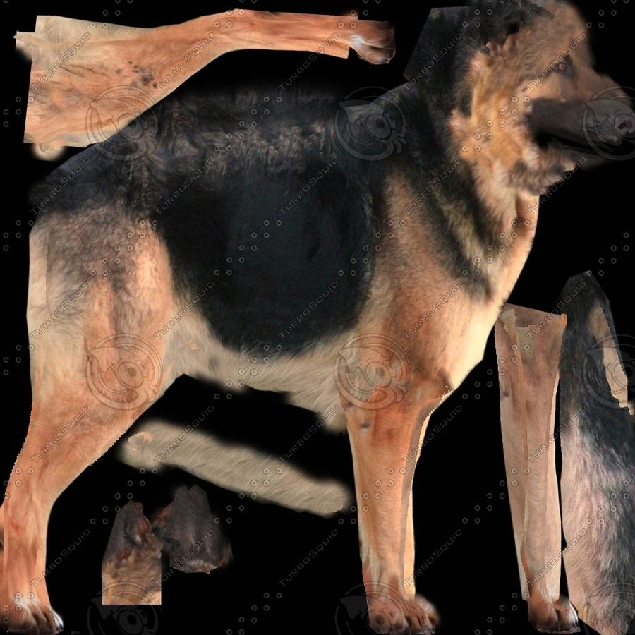 Chien berger allemand royalty-free 3d model - Preview no. 6