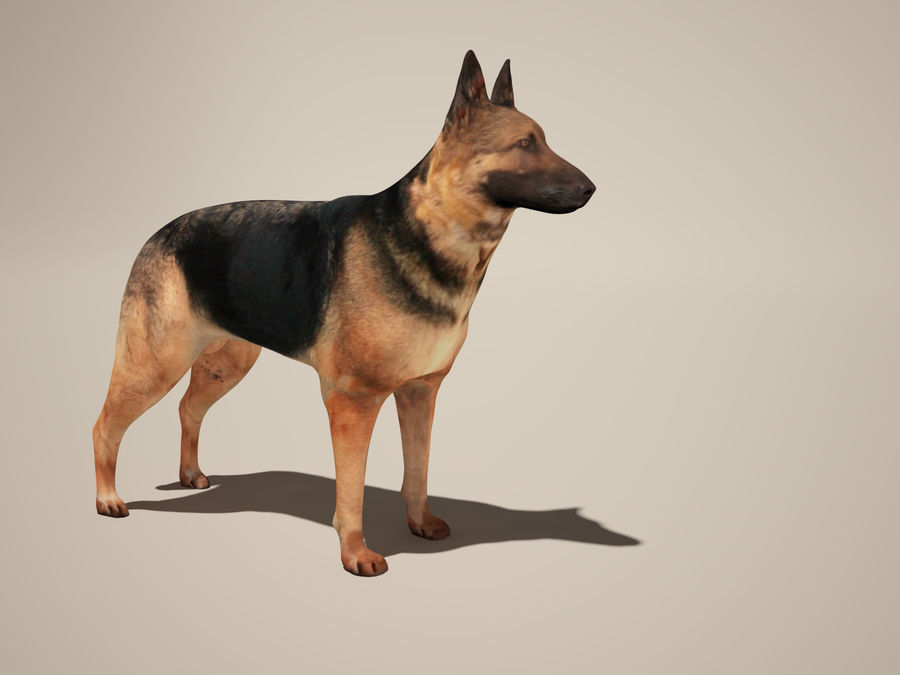 Chien berger allemand royalty-free 3d model - Preview no. 5