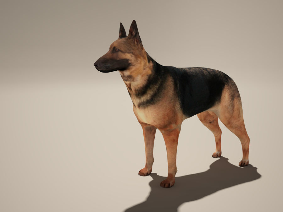 Chien berger allemand royalty-free 3d model - Preview no. 3