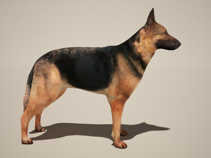 Chien berger allemand royalty-free 3d model - Preview no. 1