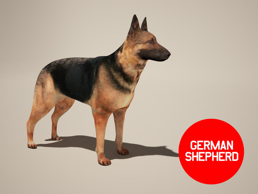 Chien berger allemand royalty-free 3d model - Preview no. 2