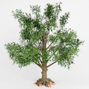 albero a foglie decidue 3d model