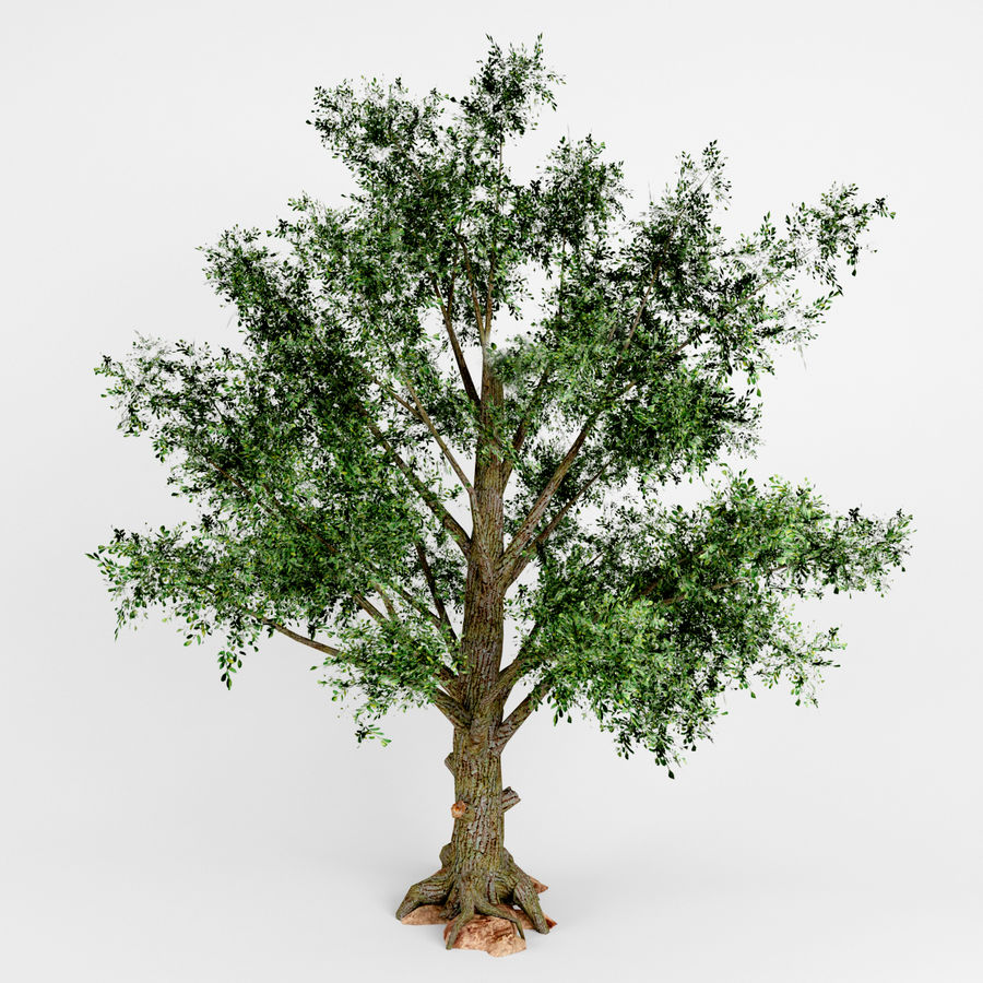 Yaprak döken ağaç royalty-free 3d model - Preview no. 2