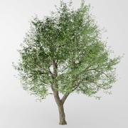deciduous tree 3d model