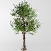 落葉樹 3d model