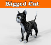 猫操纵 3d model