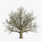 Красный Дуб Старое Дерево Зима 3d model