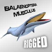 Синий кит 3d model