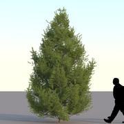 スプルースツリー4m 03 3d model