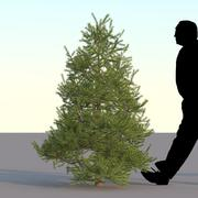 Spruce Tree  2m 04 3d model