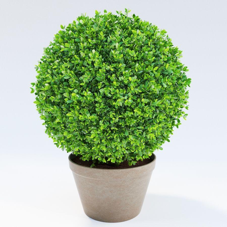 Spherical Boxwood Bush royalty-free 3d model - Preview no. 2