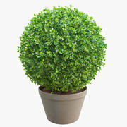 Spherical Boxwood Bush 3d model