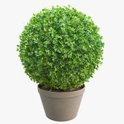 球形黄杨木灌木丛 3d model