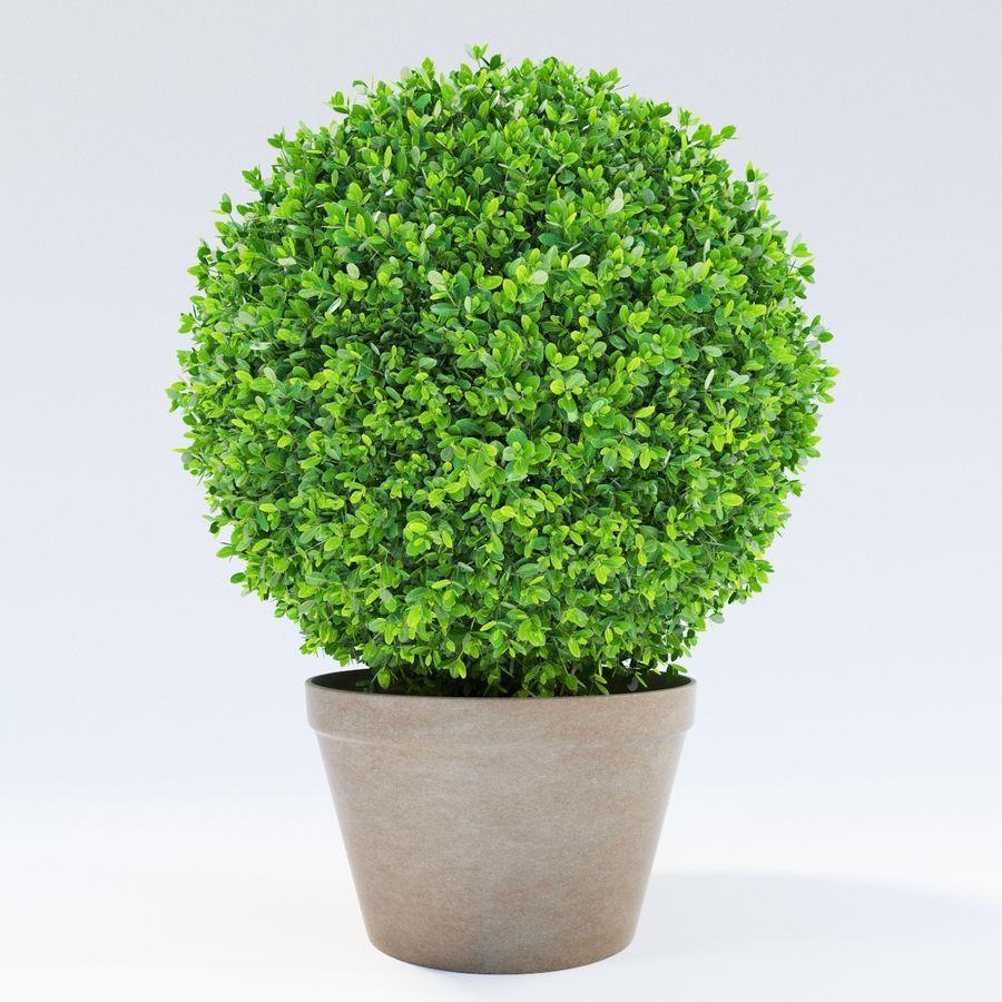Spherical Boxwood Bush royalty-free 3d model - Preview no. 5