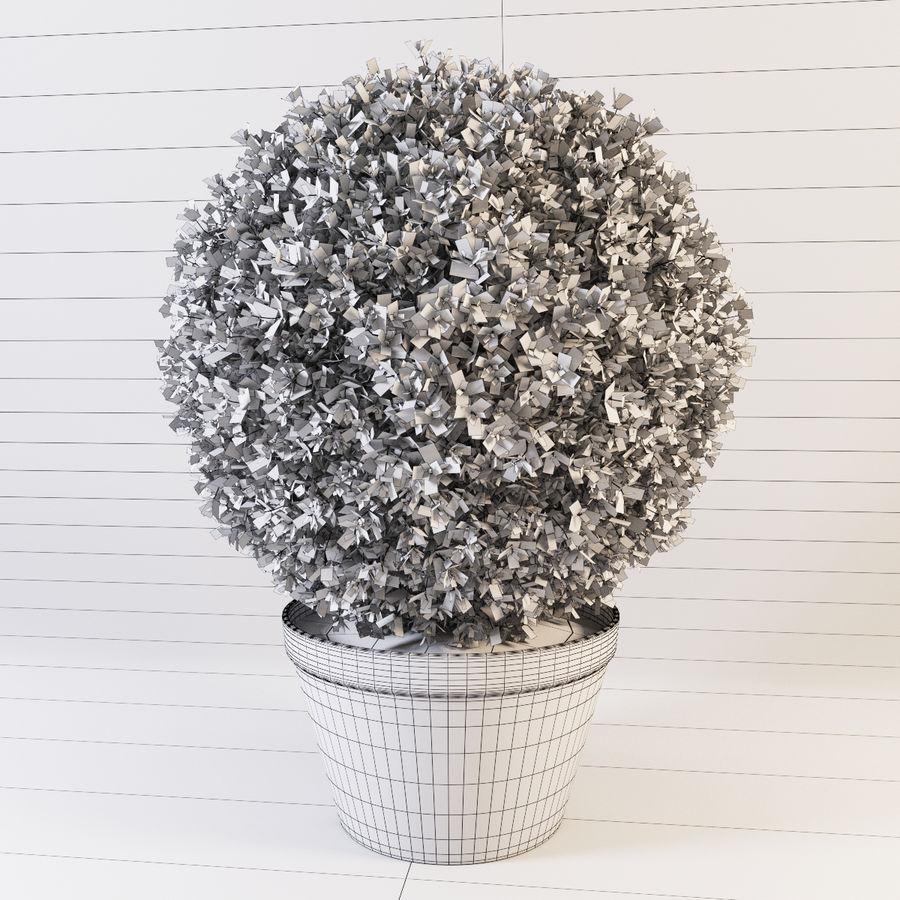 Spherical Boxwood Bush royalty-free 3d model - Preview no. 8