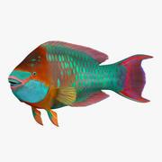 Rainbow Parrot Fish Pose 2 3D Model 3d model