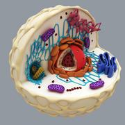 Komórka zwierzęca 3d model