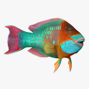 Rainbow Parrot Fish Rigged 3d model