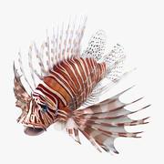 Pesce leone 3d model