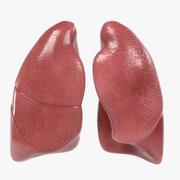 Płuca 3d model