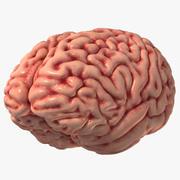 Beyin İnsan 3d model