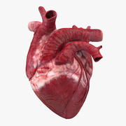 인간의 마음 3d model