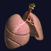 Lungs Pro Animated Textured BM 3d model