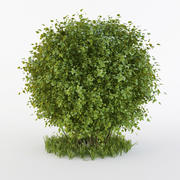 Buisson rond 3d model