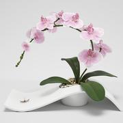 Arranjo de orquídeas 3d model