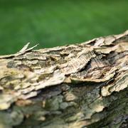 Photorealistic Bark Sample 3d model